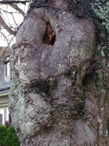 ent tree face
