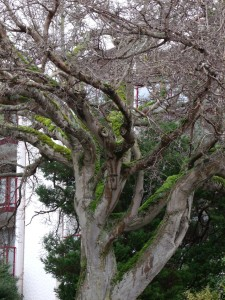 gnarled tree in front of apt