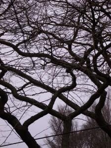 black zigging tree branches