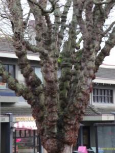 lumpy tree in front of apt