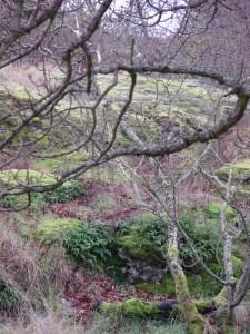 tree, hill, red fallen leaves