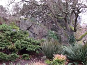 big tree by rocks