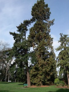 tall and short tree in park