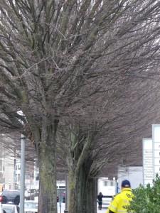 bushy trees on street